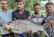 দুর্গাসাগর দিঘিতে ধরা পড়লো ৩০ কেজির কাতলা মাছ